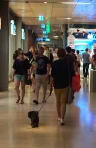 dog in mall